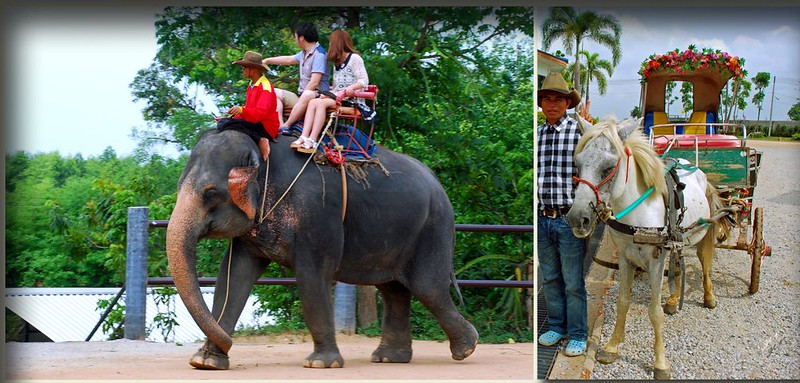 骑大象坐马车