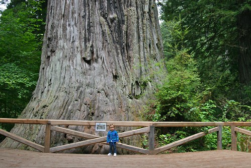 A big tree and a small girl