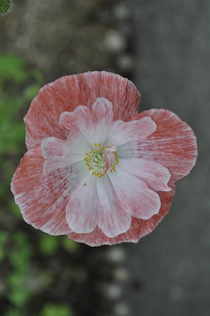 2012-08-12 garden 01