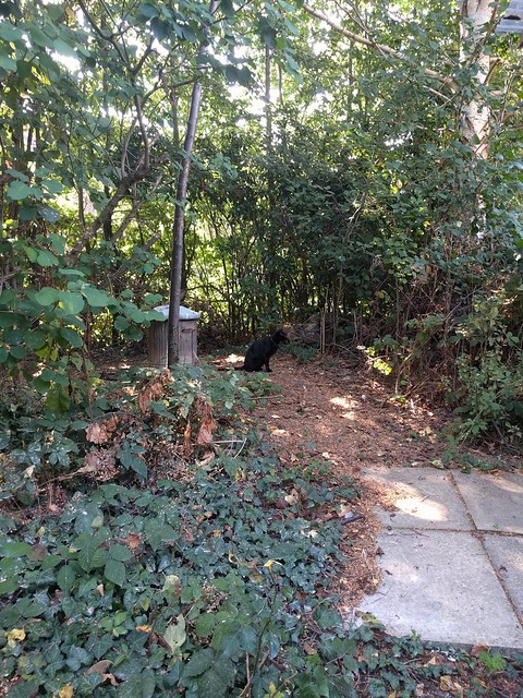 Black cat visits my studio