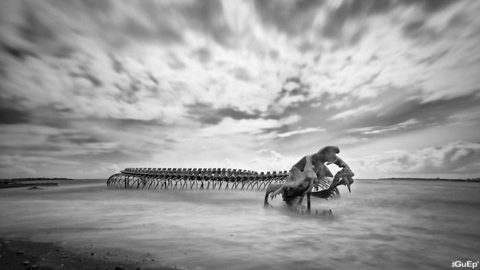 Serpent d'Ocean