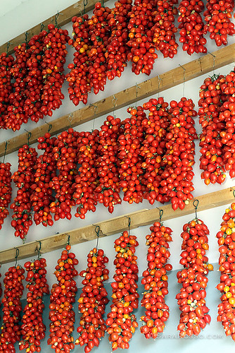 A wall of tomatoes in Italy