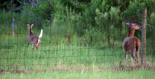 Jumping Deer Sequence Shot 9