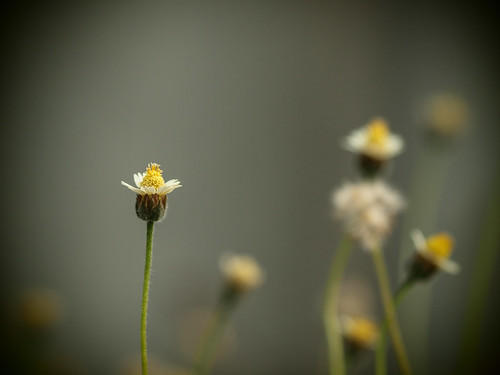 239/366 - Flower by Flubie