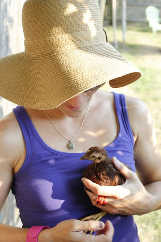 20120703. The wee Rhode Island Red.