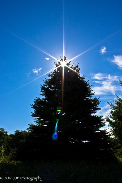 2012_Jul_21_Tree Silhouette_004