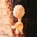 Parc National Des Deux Bale, Burkina Faso - IMG_1114_CR2_v1