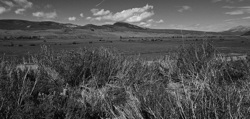 Ohio Creek, Gunnison, Colorado - b/w