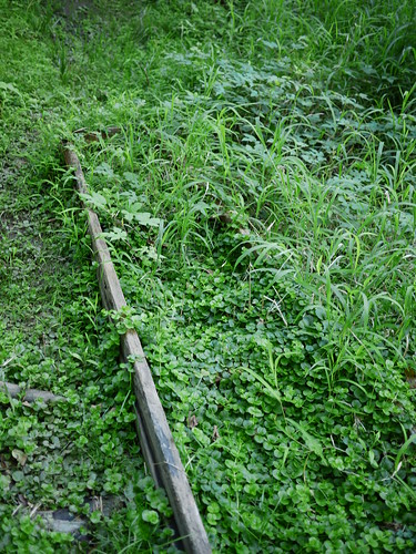 overgrown remains of a ladder