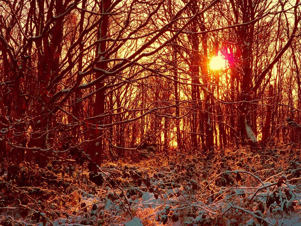 Snow in Dreamland
