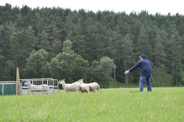 2012-07-22 Sheepdog trials 06
