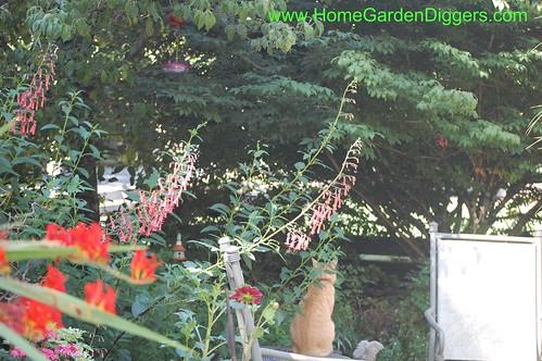 Raja Under Hummingbird Feeder