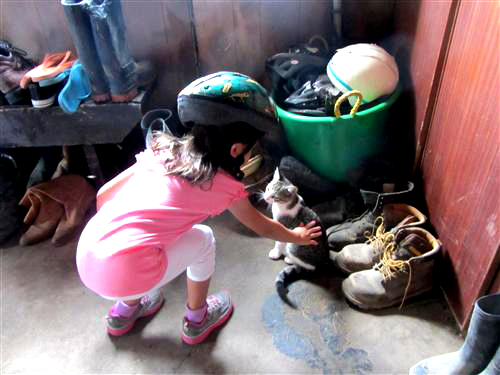 Cats in the barn at Pinto Valley Ranch