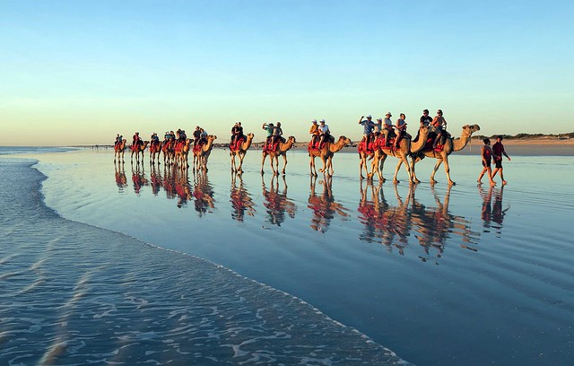 camels on Cable Beach australia