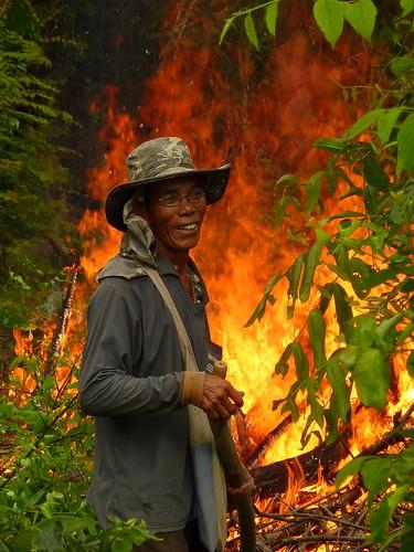 Fire in the rice fields