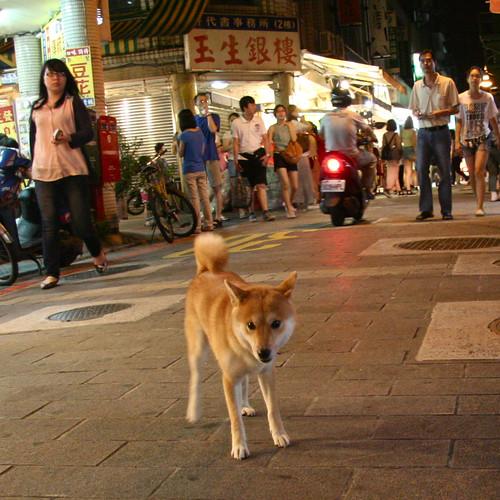 5 August 2012 Free-roaming night market Shiba