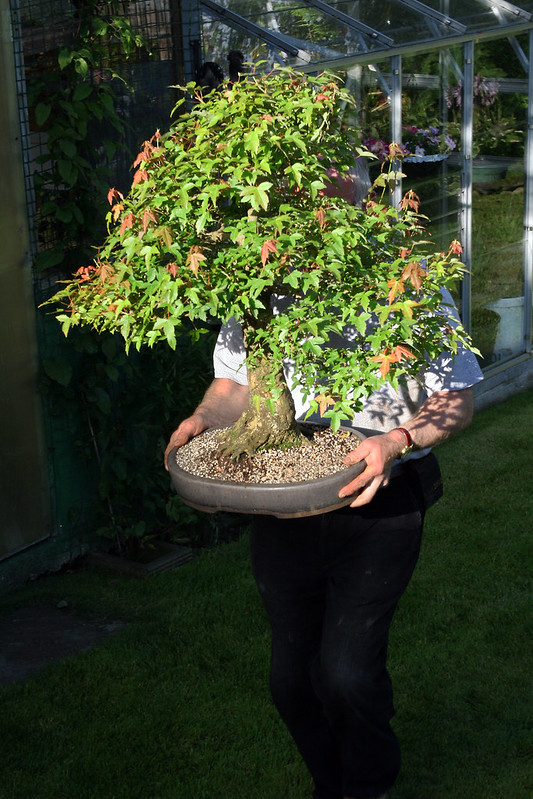 Hugh Carrying Tree