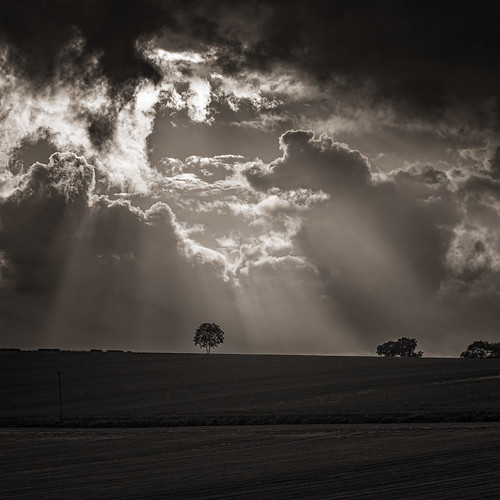Wolds-Tree and Storm Clouds