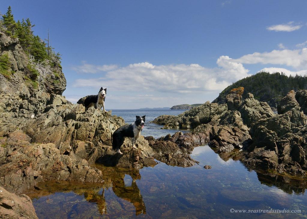 Moss & Rowan at Gull Island Cove
