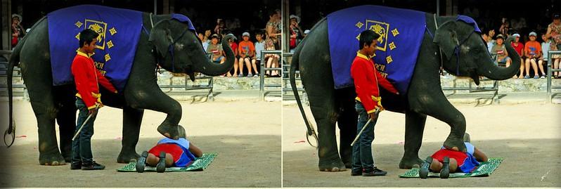 大象表演2