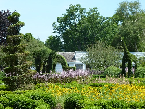 The gardens and topiary