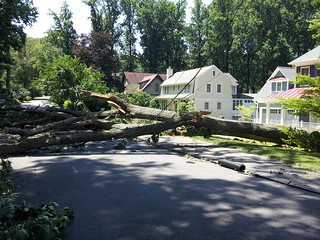 Storm damage with tree across road