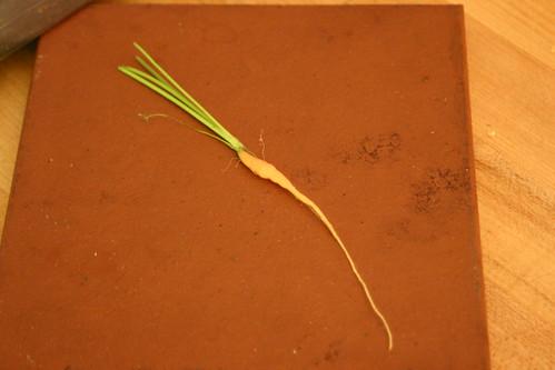 Teeny carrot