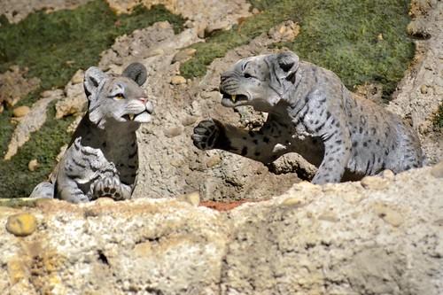 Sabertooth Kitten Models
