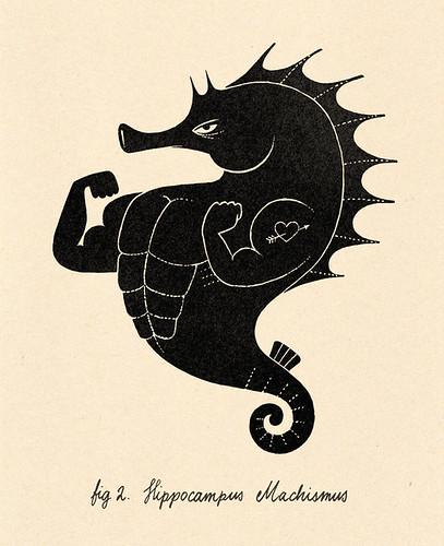 Hippocampus Machismus