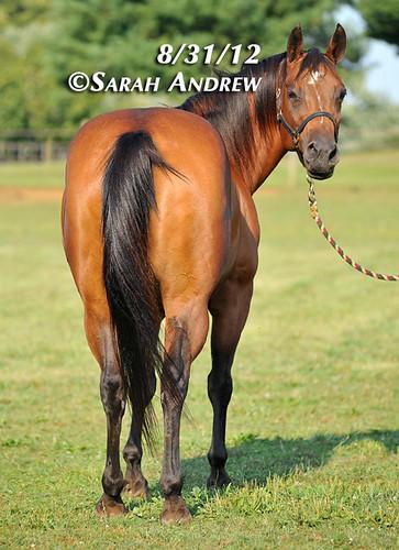 Horses and Hope: Georgia's Story
