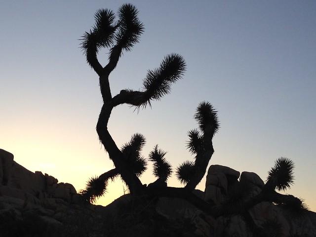 Sunrise, Joshua Tree
