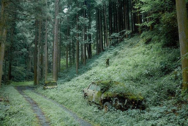 Two cars in woods. - kaneko amury