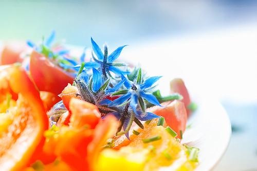Salat in Blau