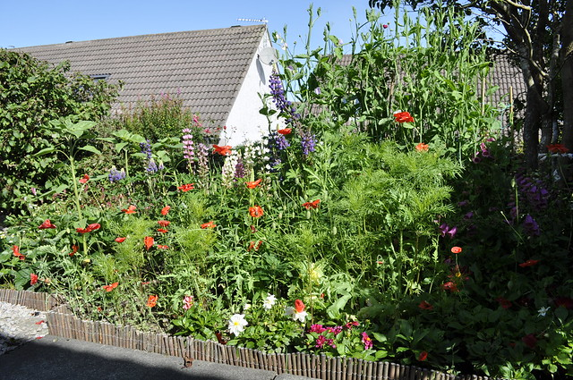 2012-08-19 garden 01