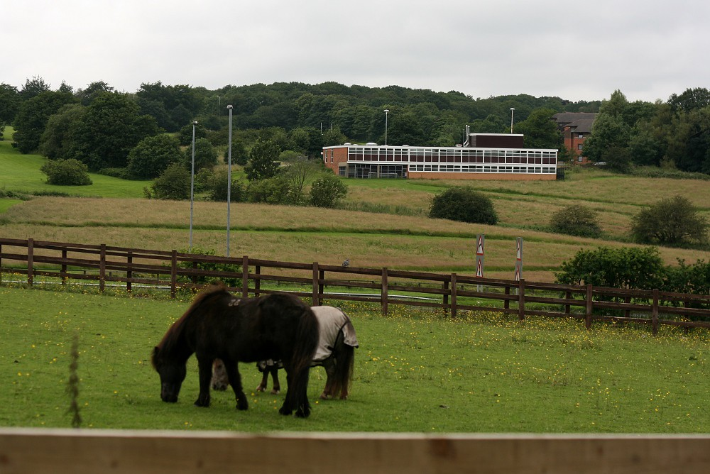 Bodington Hall, University of Leeds, viewed across some ponies, 2012