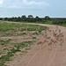 Etosha National Park impressions, Namibia - IMG_3065_CR2_v1