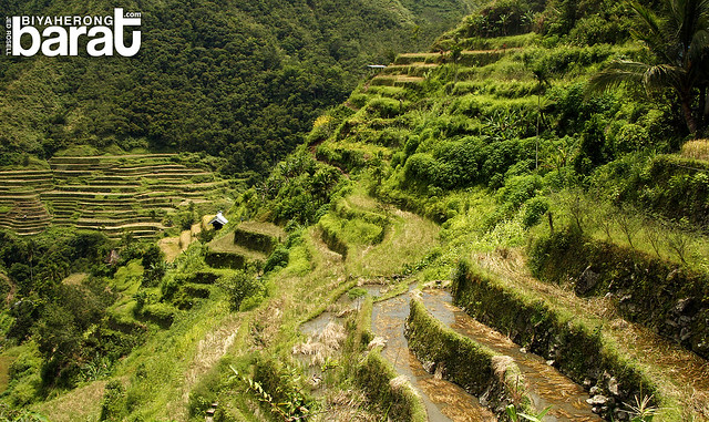 hiking in Batad Terraces