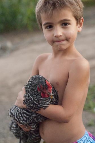 chickenherding-35
