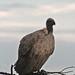Etosha National Park impressions, Namibia - IMG_3285_CR2_v1