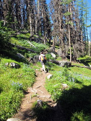 Ladyslipper Trail