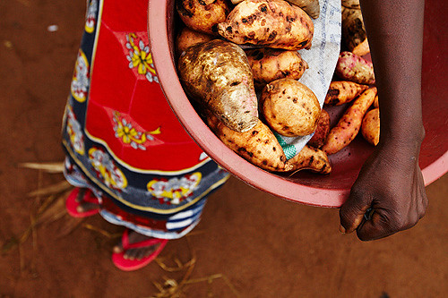 Growing Sweet Potatoes in Tanzania