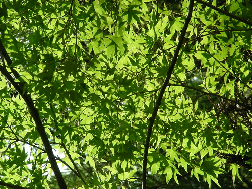 light and leaves