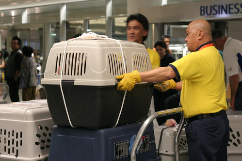 Ramon and assistant move the dogs at SFO