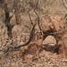 Trees in Nigeria - IMG_2338_CR2_v1