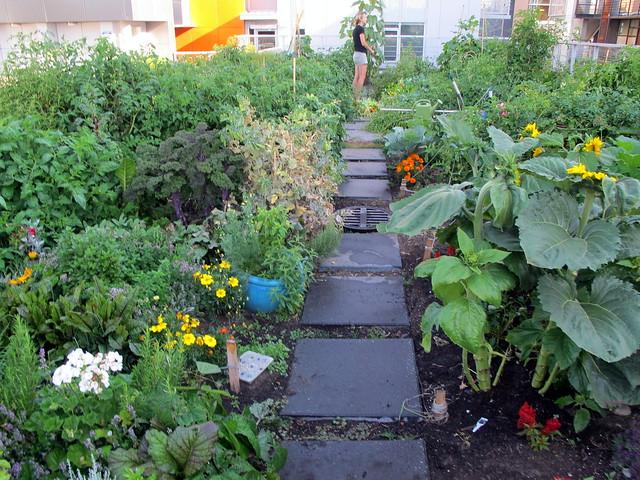 Rooftop Garden Jungle