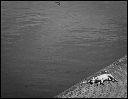 Hund schwarzweiss
