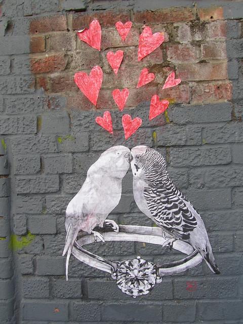 Love birds, Club Row