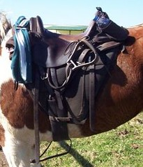A trail saddle from South Africa