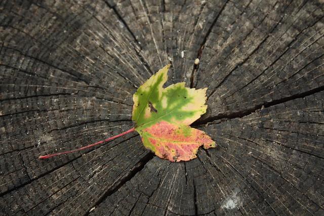 Time Portal to Autumn