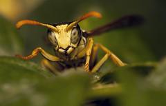 green world. little wasp awakening